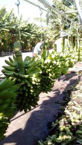 comercial de frutas lider